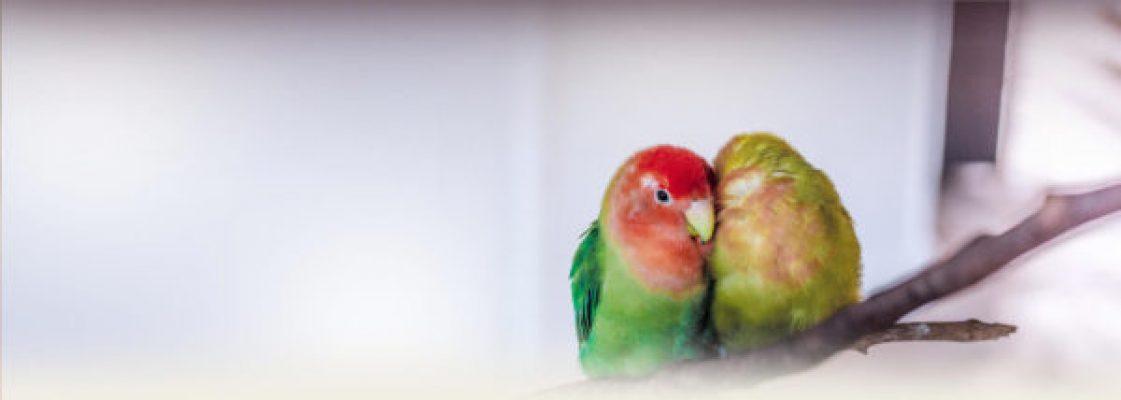 header-bird-health